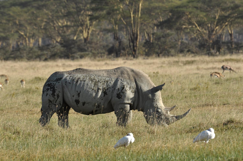 Wildlife Of Lake Nakuru Kenya