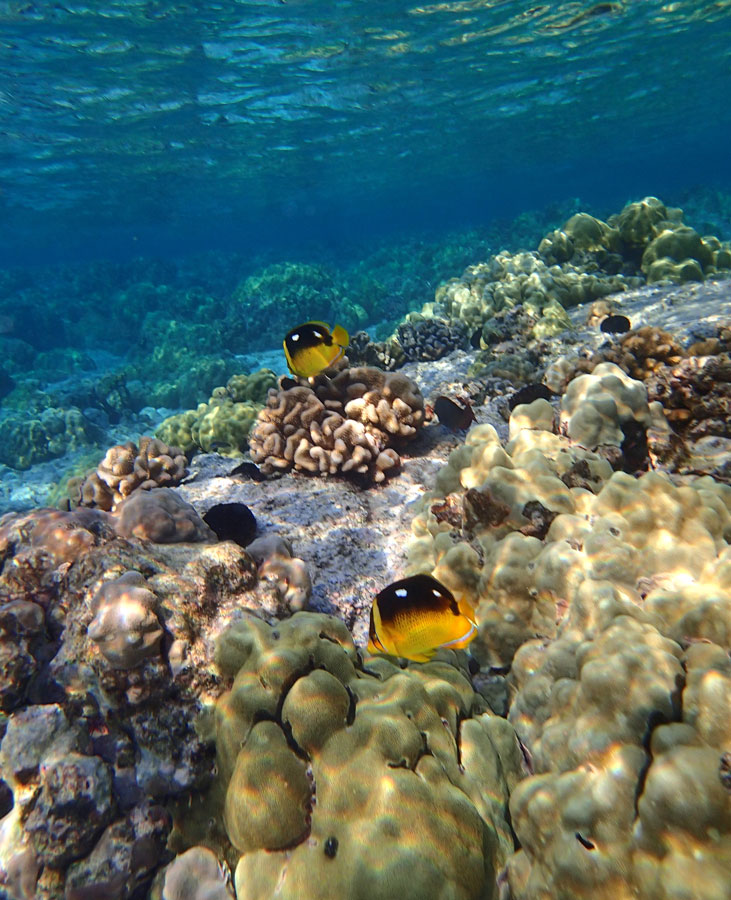 Untitled document for Hawaii reef fish